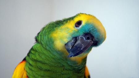 neck position parrot