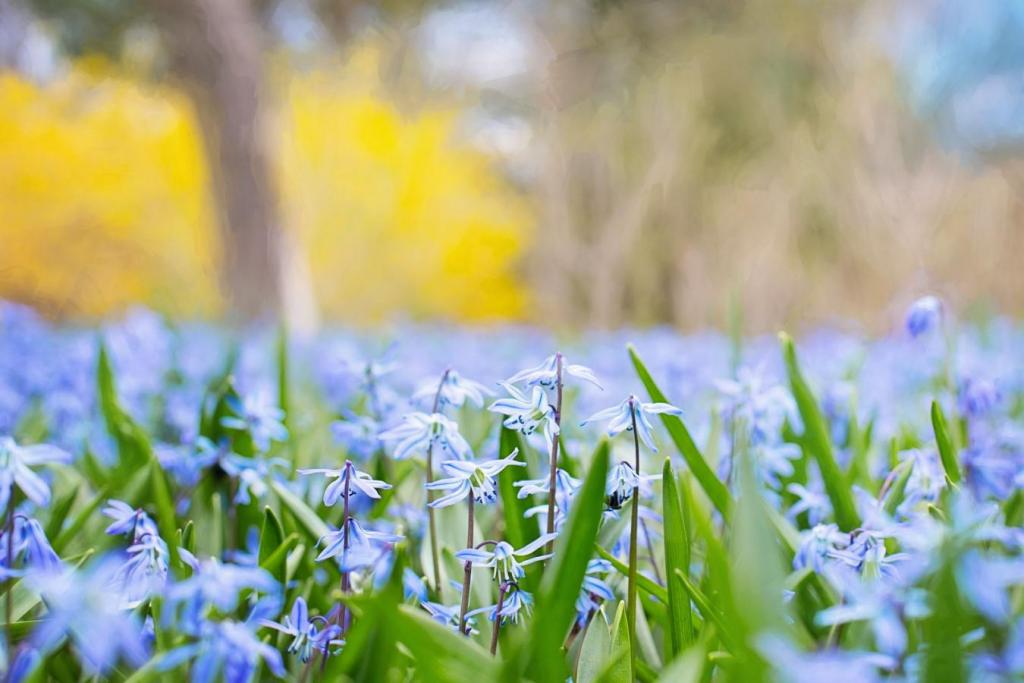 snow piercer spring flower blue grass